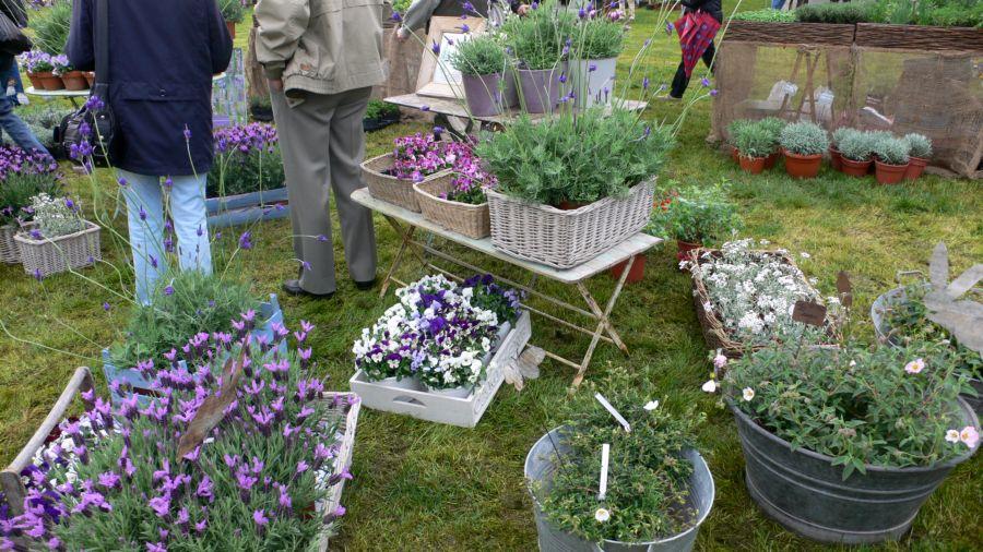 I giardini del volturno torna la mostra di piante e fiori for Piante e giardini