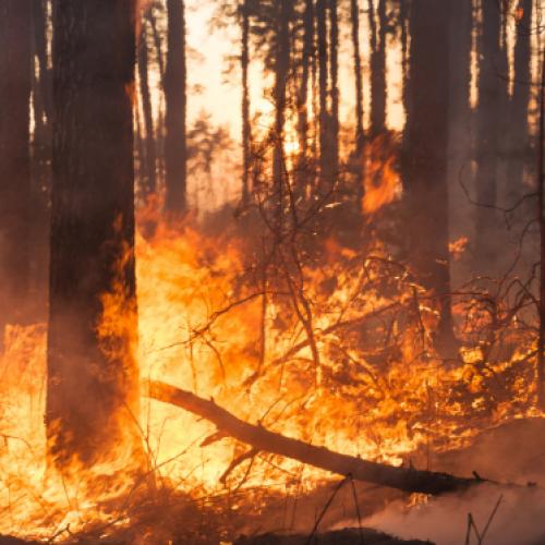 Legambiente. In Italia nel 2015 andati in fumo piu' di 37mila ettari di superficie