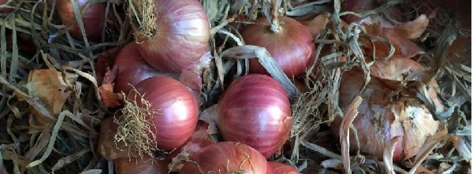 La Via delle Bontà passa per Alife, tra cipolle e fagioli