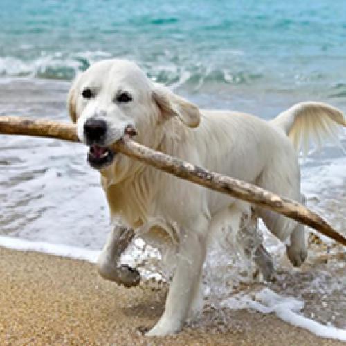 Inseparabili anche d'estate! Cani in vacanza