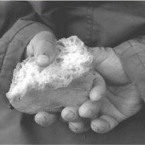 Del pane per ogni bocca. In piazza per i più bisognosi