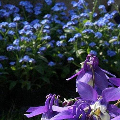 I giardini del Volturno. In mostra piante e fiori