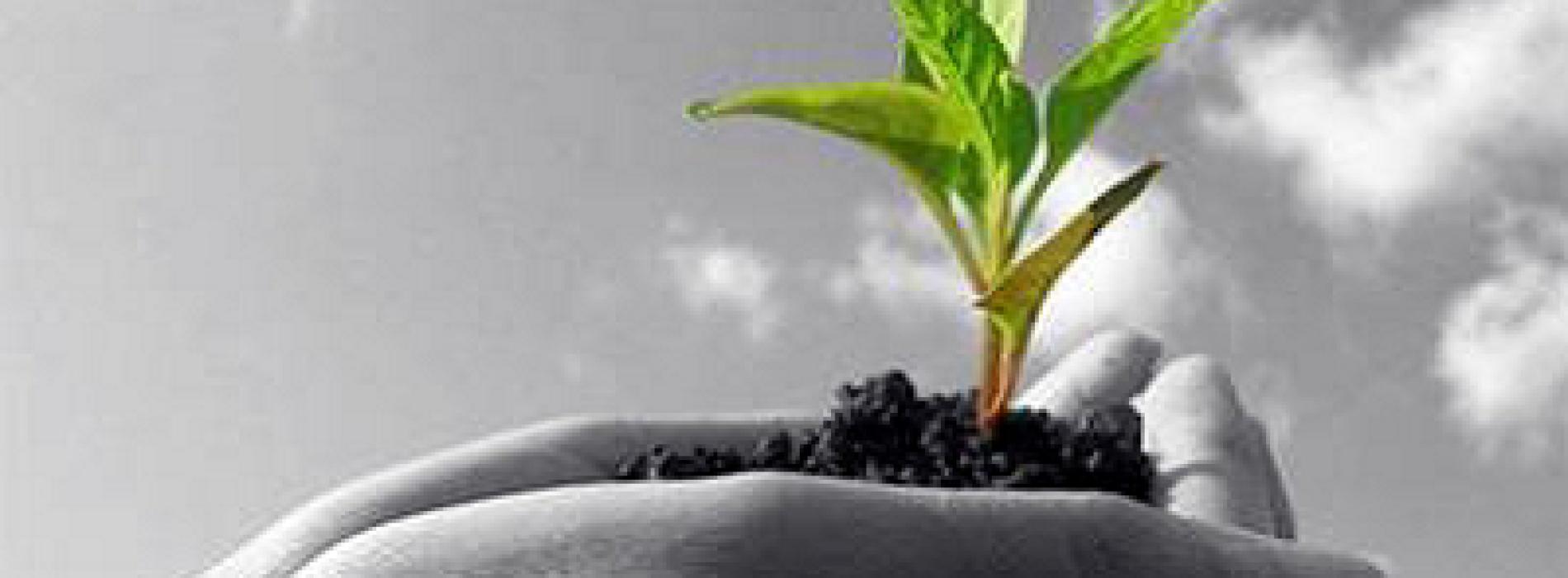 Dalla Regione un tavolo verde per l'agricoltura