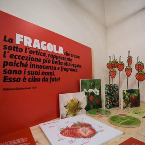 A Parete il primo Museo della Fragola