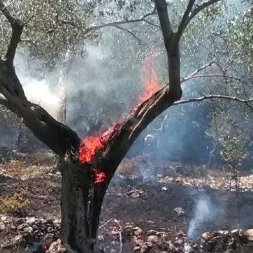 #emergenzaroghi / La parola a Matteo Palmisani, LipuCaserta