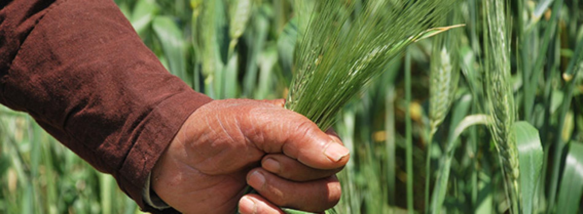 Sementia. Slow Food Campania punta sull'innovazione