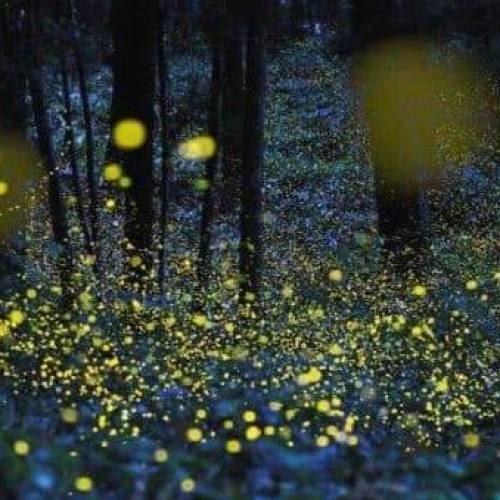 Lucciole per lanterne, è luce naturale all'Oasi di San Silvestro