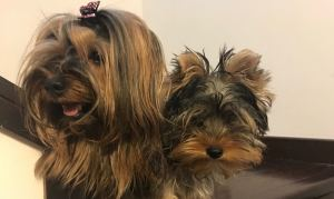 Cani per articolo