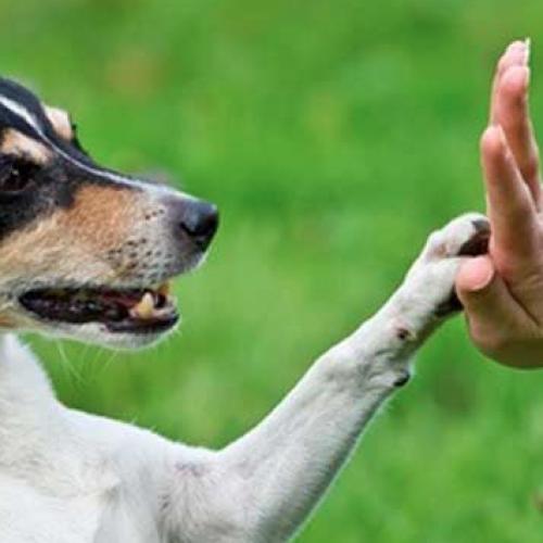 Fare tesoro dell'esperienza, la regola che vale anche per i cani