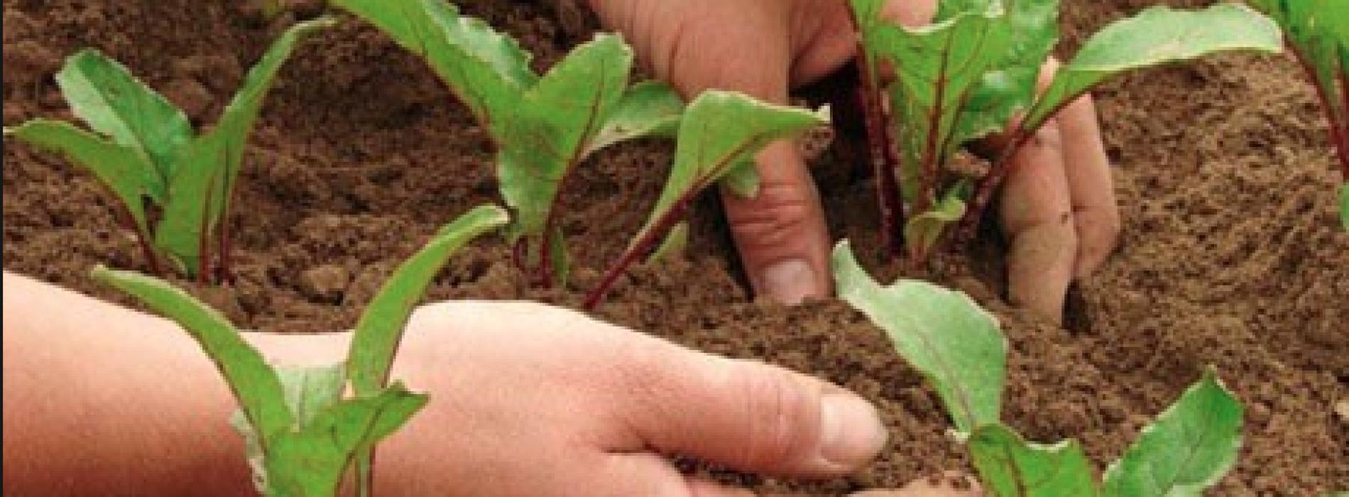 Aziende agricole, le nuove opportunità per i professionisti