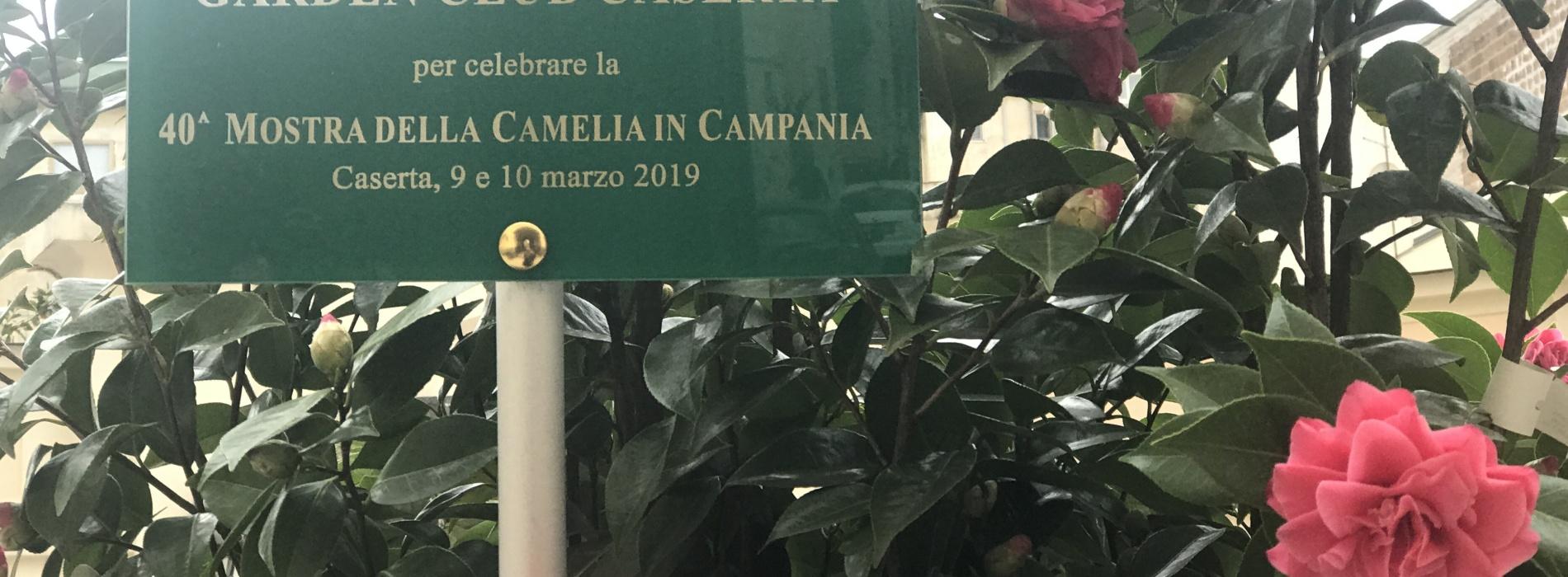 Camelie. La bellissima di Caserta. A Palazzo Paternò la mostra