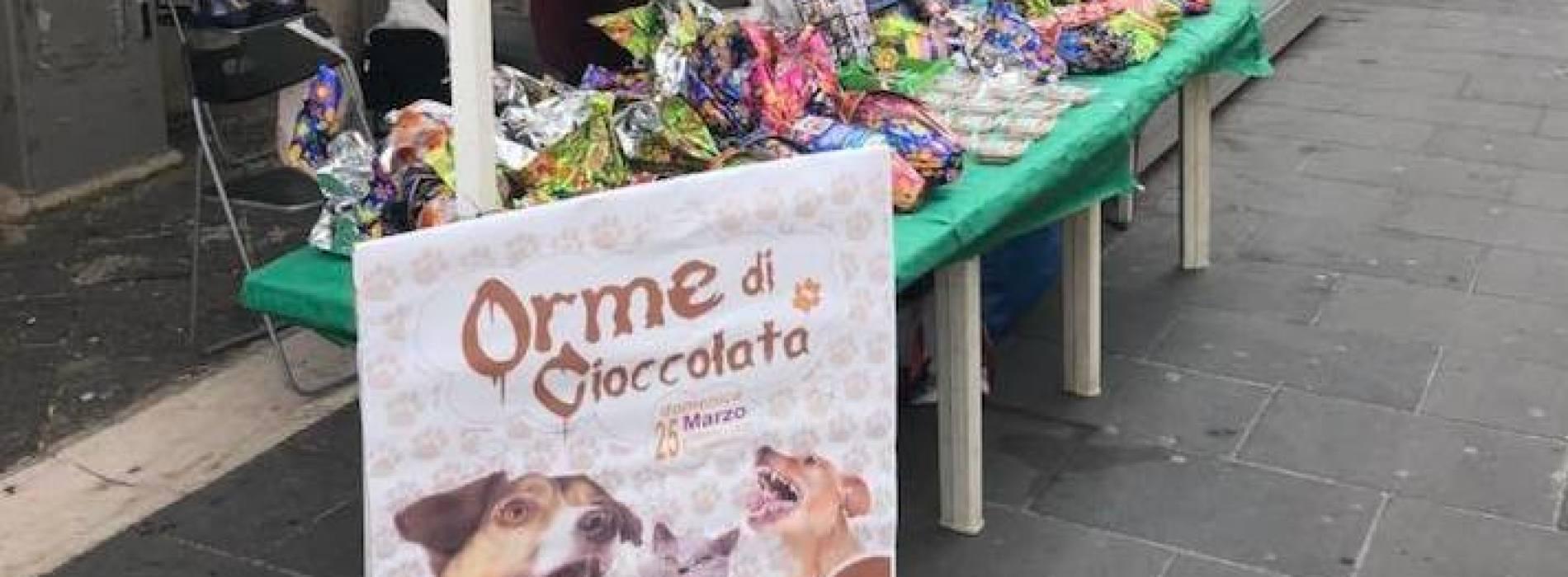Orme di cioccolata, una giornata di solidarietà per i pelosi