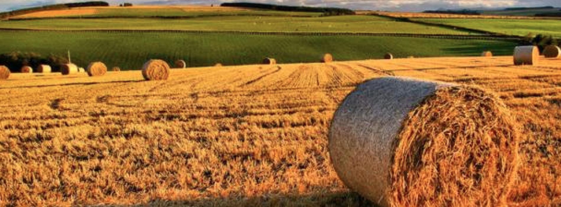 Aziende agricole, fattore strategico di crescita. Il convegno