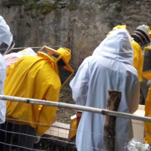 L'apicoltura è ancora un'opportunità? Esperti a confronto