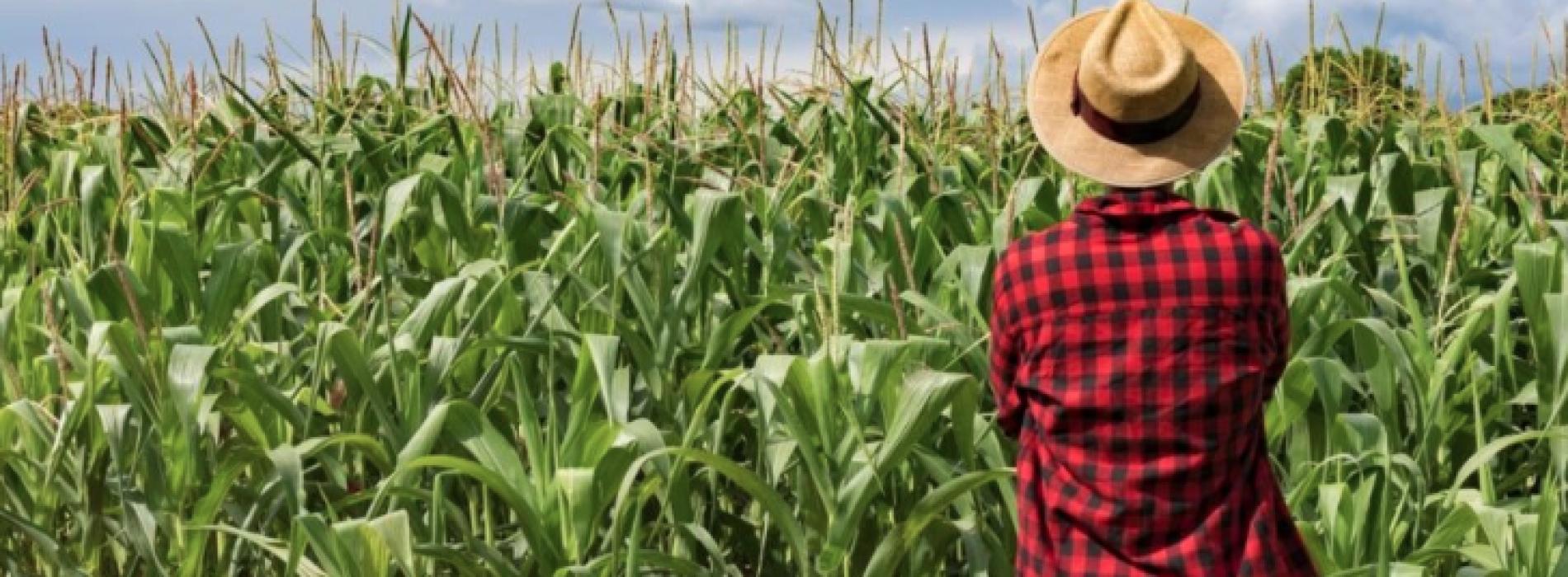 Aziende agricole, le alternative concrete per il futuro