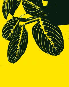 Stellainarte Picardi 1 [Leaves]