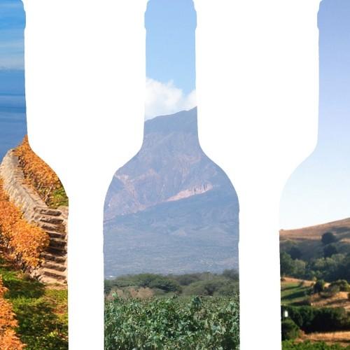 """""""Terroir"""", il gusto del vino racconta sempre il luogo di origine"""