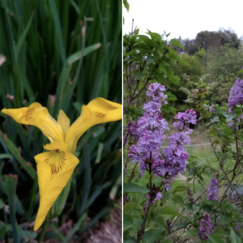 W la Natura, omaggio floreale dall'Oasi Wwf di San Silvestro