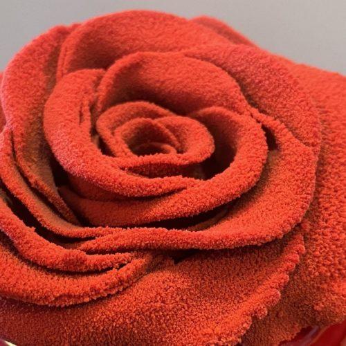 Auguri a tutte le mamme, Ondawebtv propone una dolce rosa