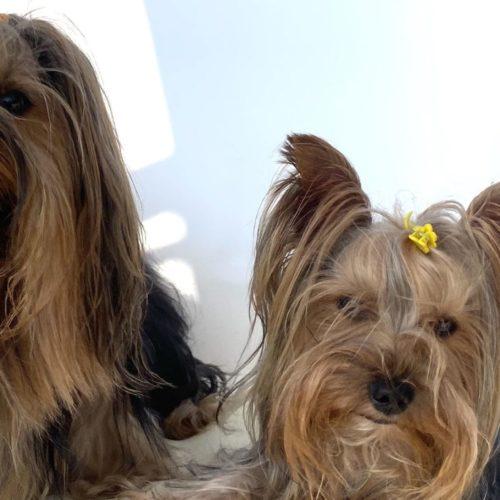 26 agosto, Giornata del Cane. Per chi li ama è sempre dog day