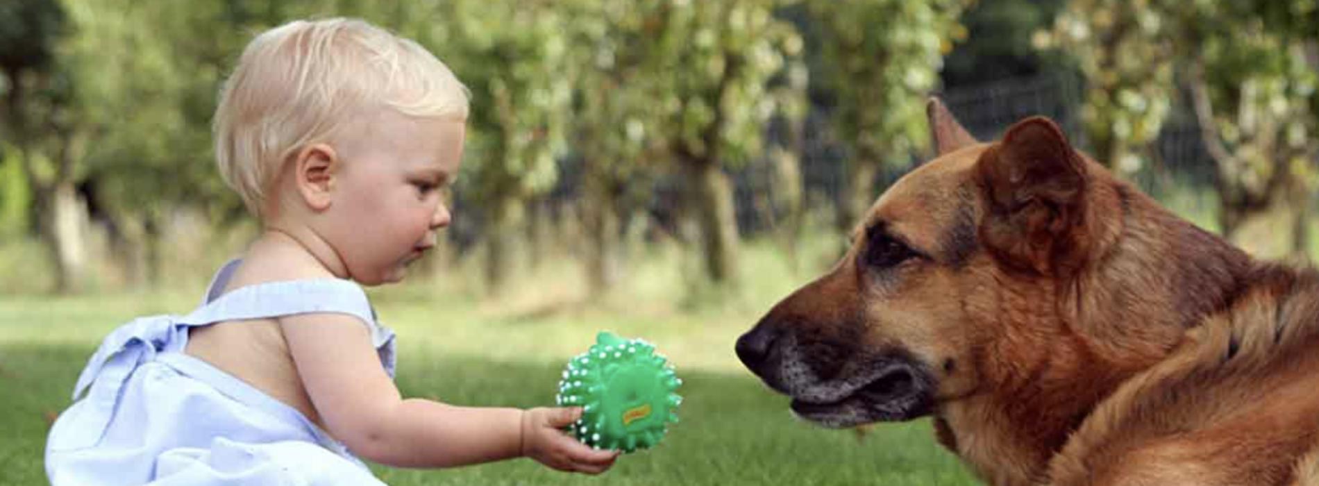 Un occhio verde e uno blu, fiaba che racconta l'amore per un cane