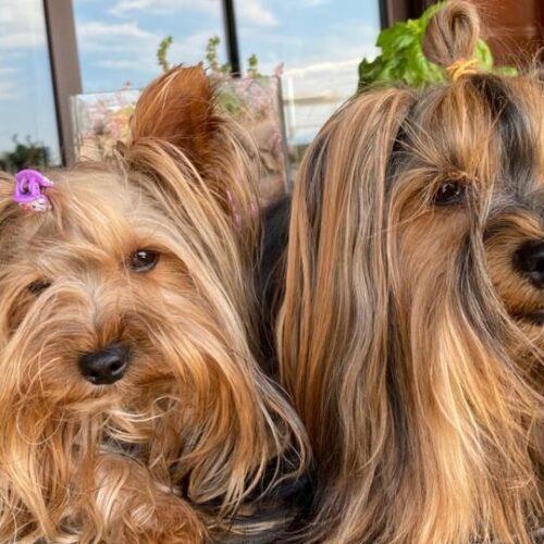 Senti chi parla, i cani ci guardano. E vivono in armonia con noi