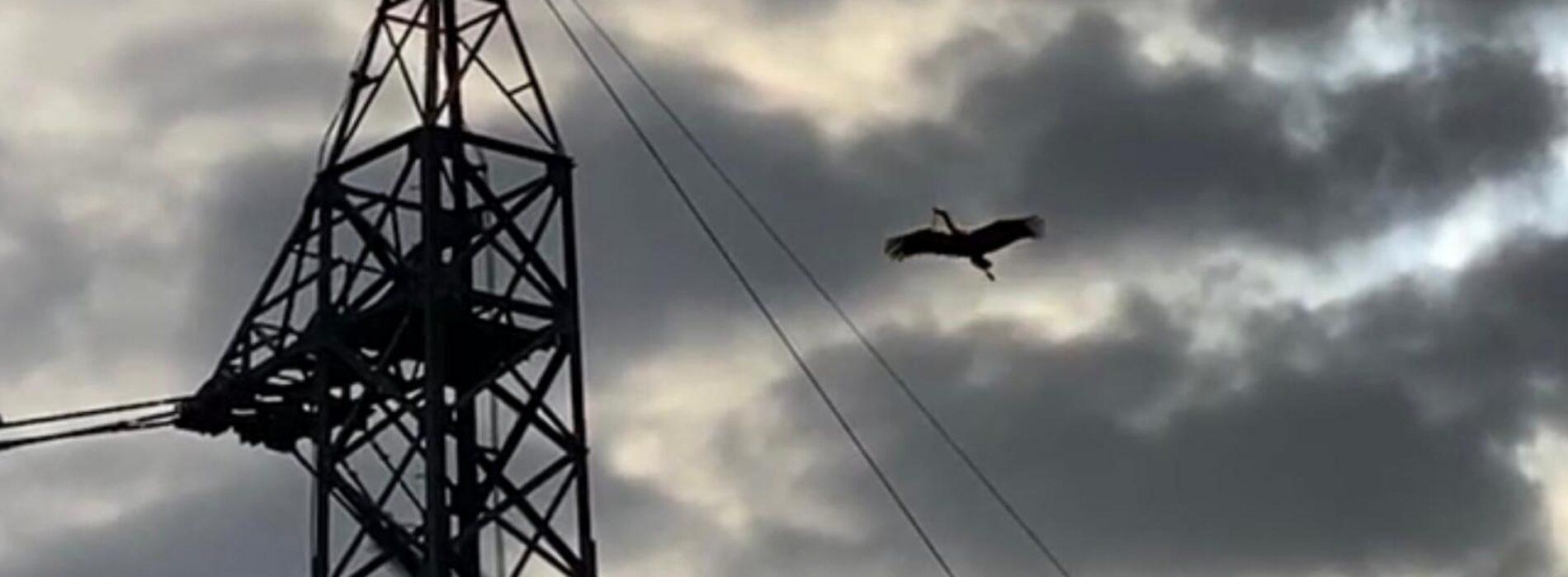 Qui si crede alla cicogna, nei Mazzoni il nido dei grandi uccelli