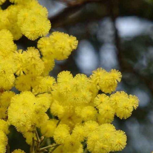 La Campania parla con i fiori, boom di vendite agli inizi 2021