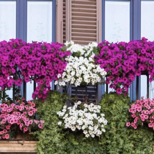 Son tornati a fiorire i balconi, Cesa si fa bella con un concorso