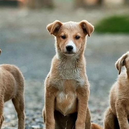 Protezione animali e ambiente, il tour di incontri in Campania