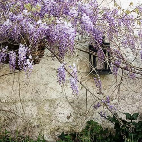 A Roccaromana c'è un giardino segreto, con tanta musica