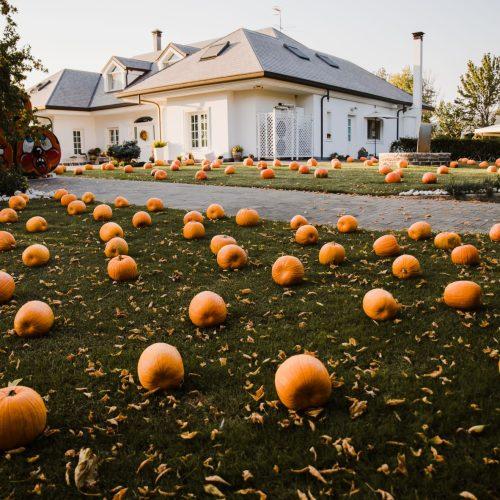 Arriva Halloween! A Pignataro Maggiore il giardino di zucche