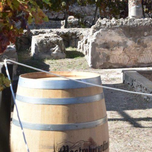Pompei, torna la vendemmia autunnale nel Parco archeologico